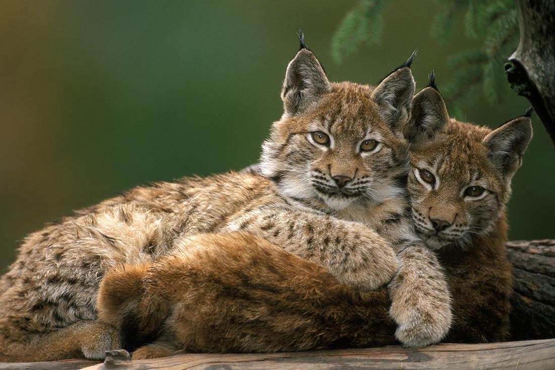 Selbst Tiere könnt ihr im Wildpark Assling erleben!  (Bild: TVB Osttirol)