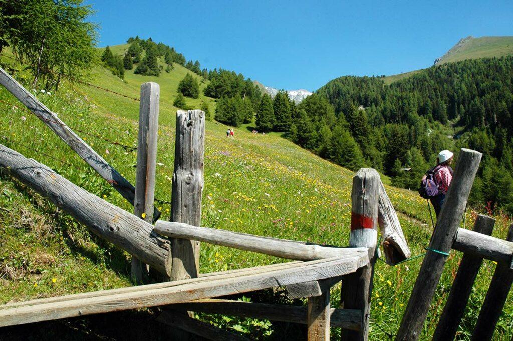 Blühende Almwiesen