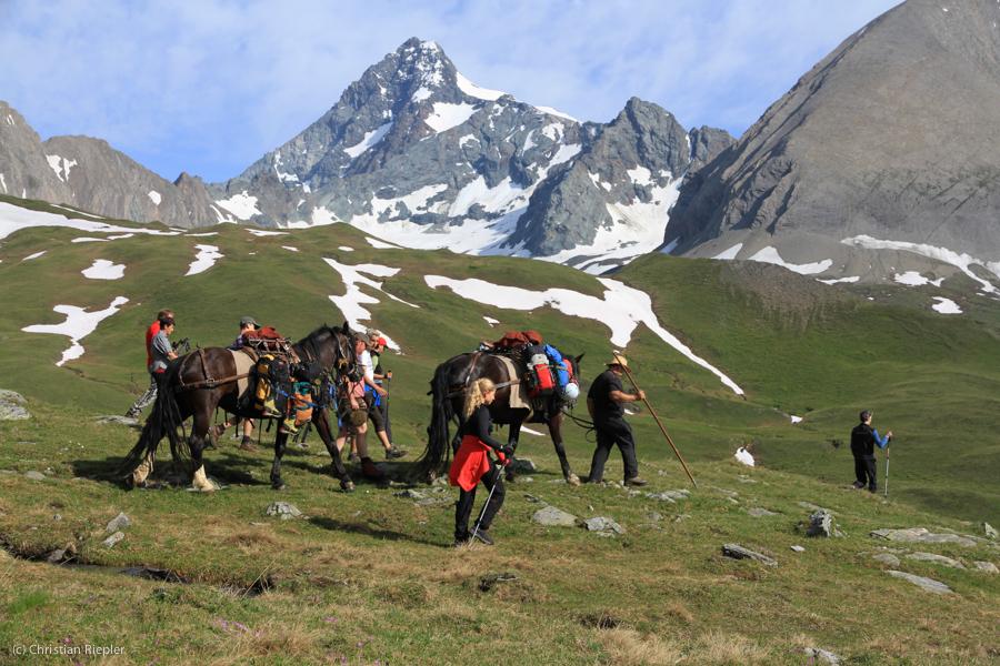 Heimische Pferde übernehmen den Tansport des Gepäcks