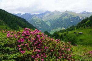 Mach eine Berg-Safari in Osttirol