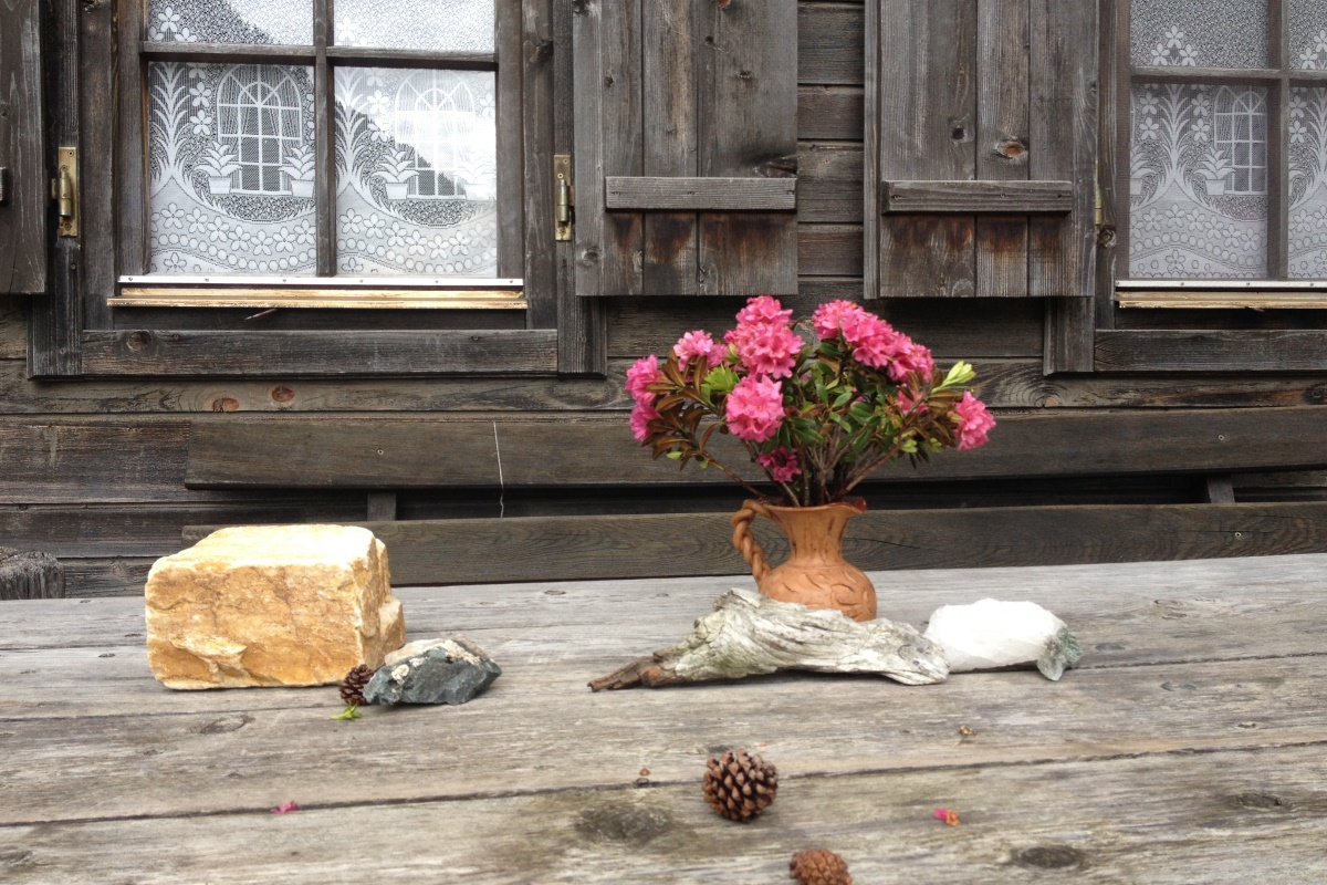 Almrosen auf unserer Terrasse