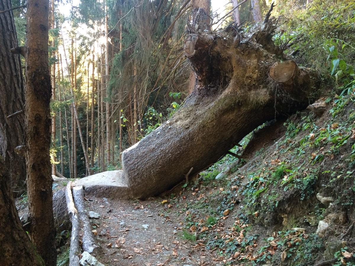 Der Weg führt sprichwörtlich über Stock und Stein