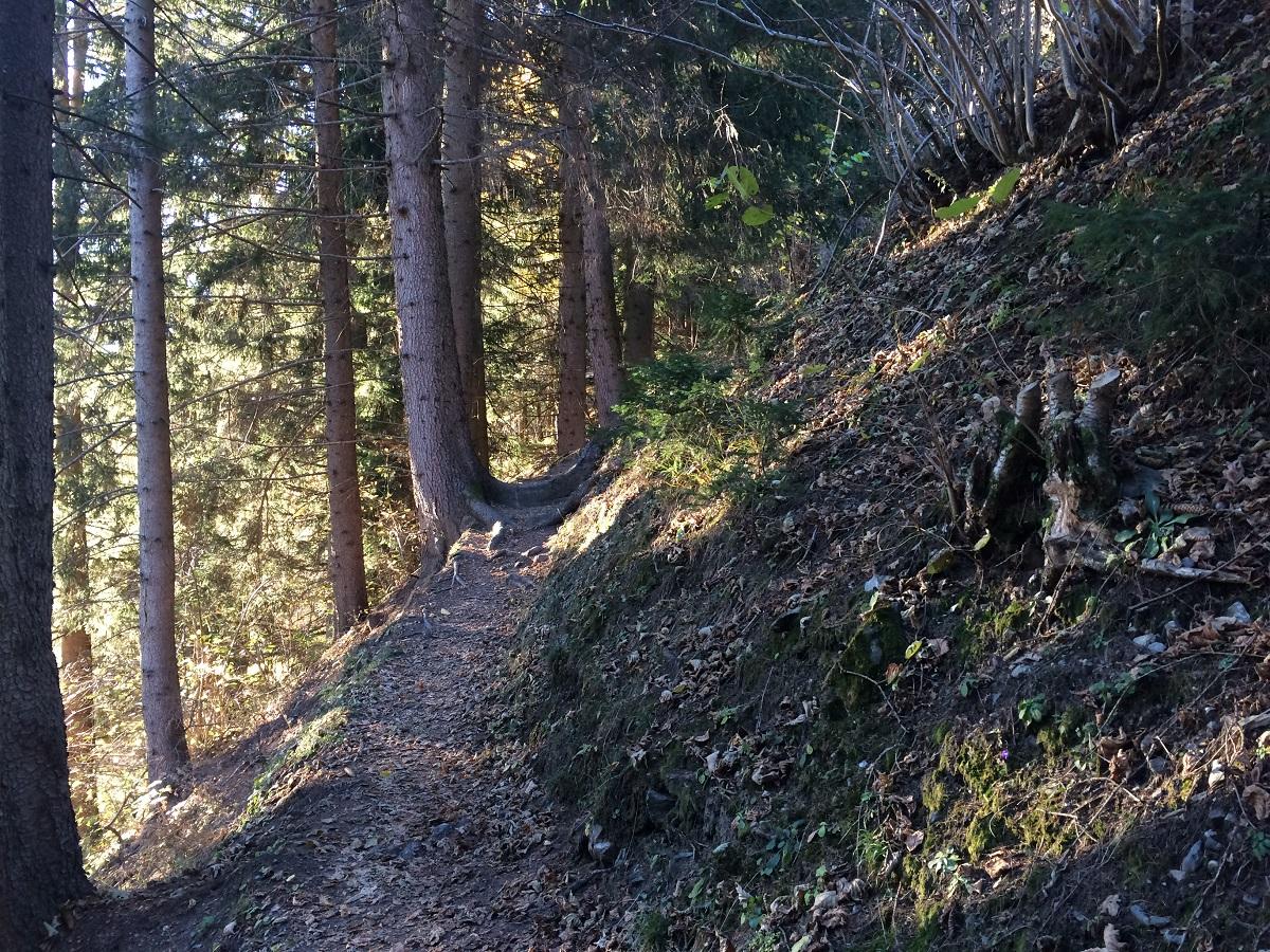 Der Natur hautnah sein und Waldtiere beobachten