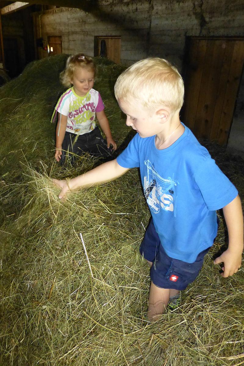Urlaub am Bauernhof - Heu
