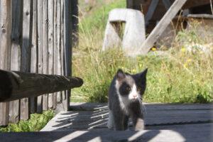 Urlaub am Bauernhof - Katze