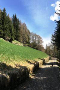 saftige-bergwiesen