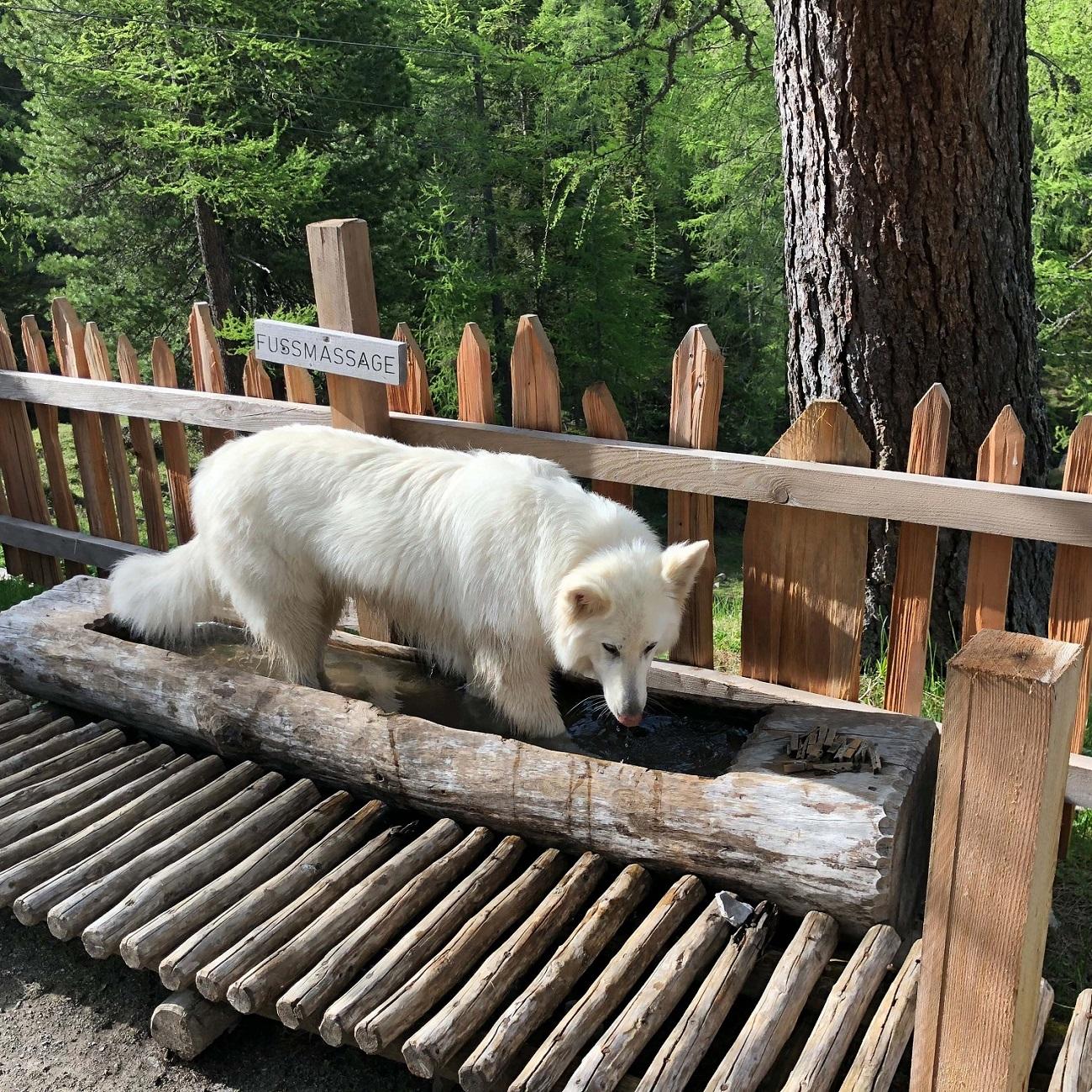Maya, der Hund von Beates Bruder, braucht nach der 4-stündigen Wanderung ein Fußbad.